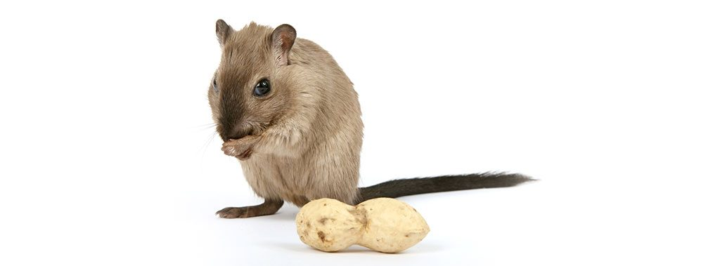 EU approval conditions for anticoagulant rodenticides until 2024