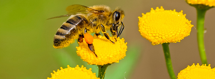 Eu votes yes to ban bee-harming pesticides